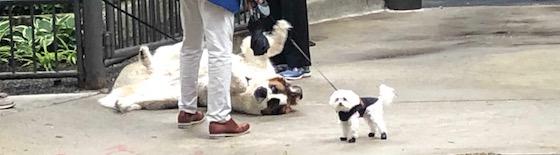 big dog scared of small dog
